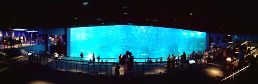 Memandangi Open Ocean