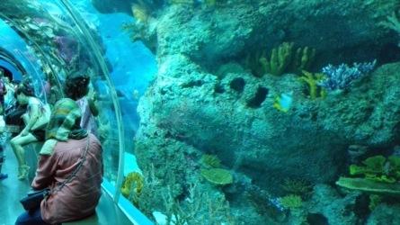 Sisi lorong kaca ini banyak karang-karangan juga