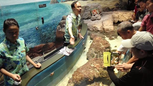 Ini kolam khusus untuk menyentuh langsung beberapa makhluk laut itu